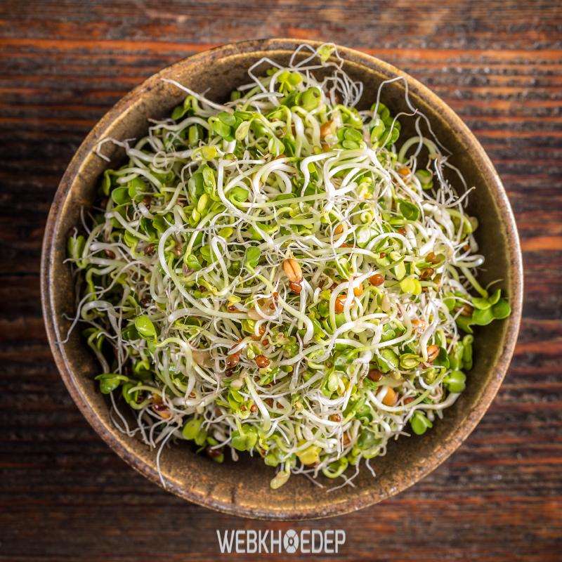 Món ăn rau giảm cân từ giá đỗ