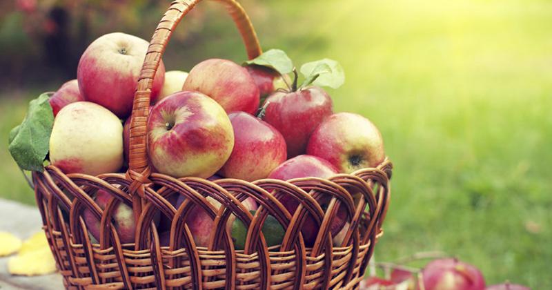 5 thực đơn ăn táo giảm cân tiêu mỡ bụng trong 5 ngày hiệu quả dễ nấu