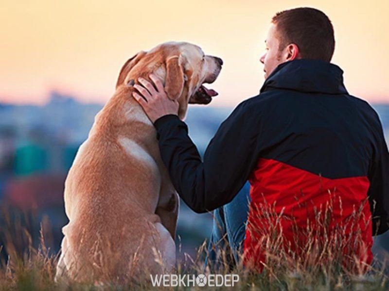 Động vật cũng có thể giúp người bệnh giảm căng thẳng và đối mặt với cảm xúc tiêu cực