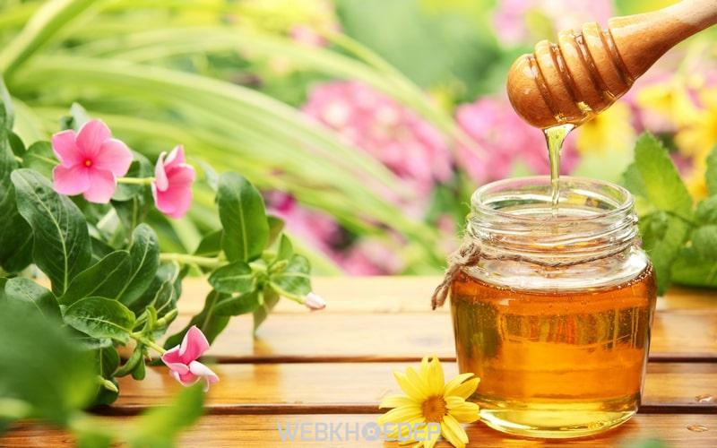 Trẻ em ăn nhung hươu có tốt không khi kết hợp với mật ong?