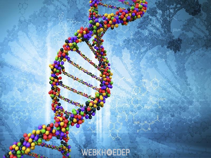 Nguyên nhân ung thư tuyến tiền liệt chủ yếu là do hệ Gen và DNA của người bệnh