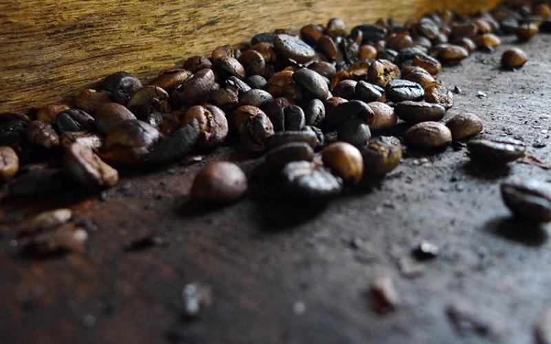 Cấu tạo và quá trình hình thành nên hạt cafe chồn