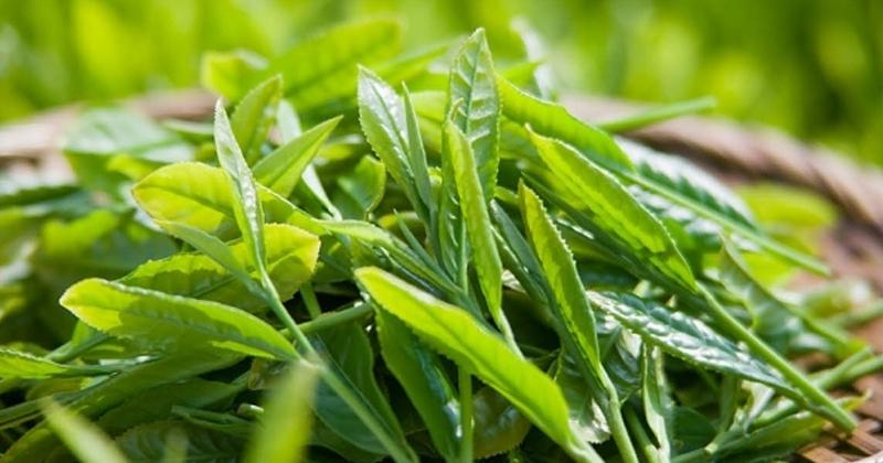 Chăm sóc da hiệu quả với sản phẩm từ trà xanh