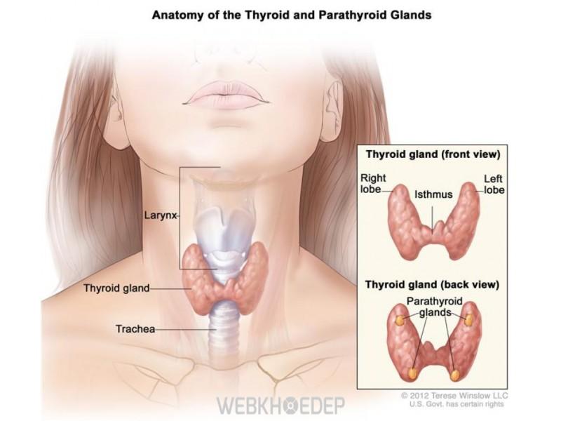 Phải luôn để ý đến những bất thường của cơ thể nhất là cổ họng để phát hiện kịp thời các dấu hiệu của ung thư tuyến giáp